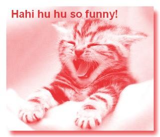 kitten laughter