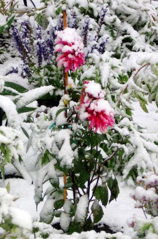 snow flowers 1